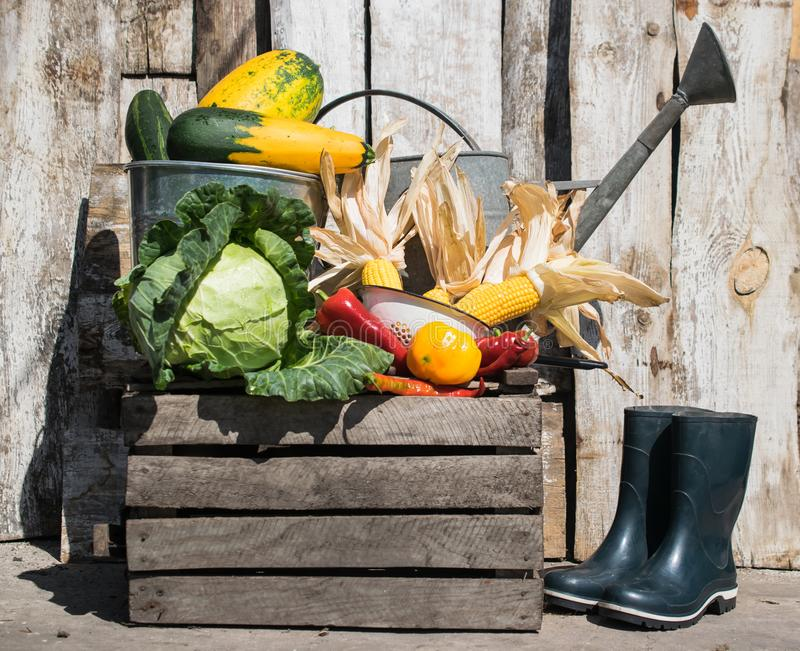 Still life with harvest of fresh vegetables with watering can and rubber boots royalty free stock photos