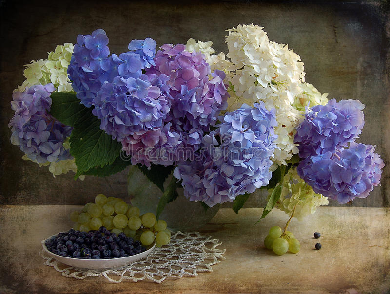 Still life with a hydrangea stock photography