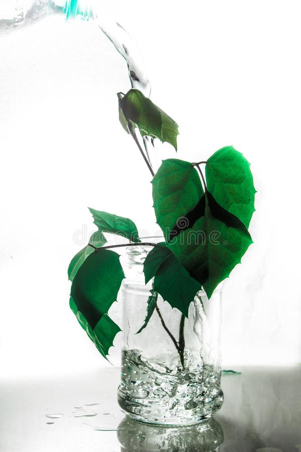 Still life about life. Life in a jar. Allegory. plant. water. subject photo. art. the future of the tree. Green stock photography