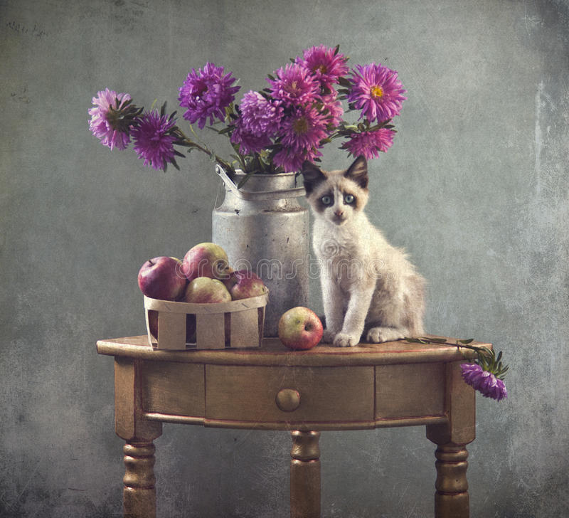 Still life and kitten royalty free stock image