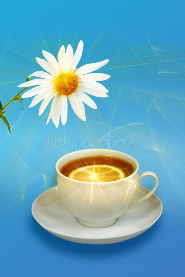 Download Still-life With Lemon-tea And White Flowers Stock Photo - Image of idyllic, still: 14632206