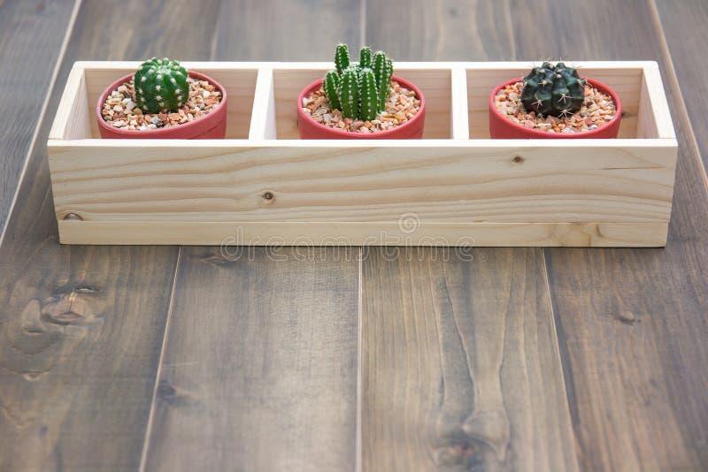 Still life of natural three cactus plants stock image