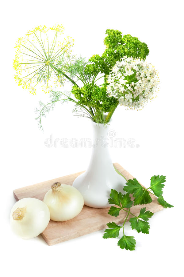 Download Still life with onion stock image. Image of life, isolated - 26326893