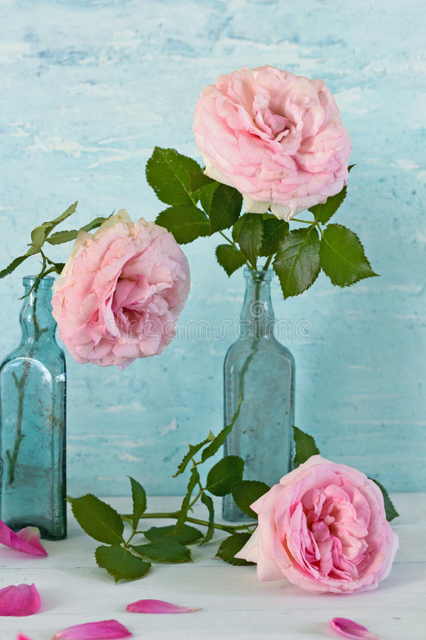 Still life with pale pink roses in vintage vase. On a blue background vector illustration