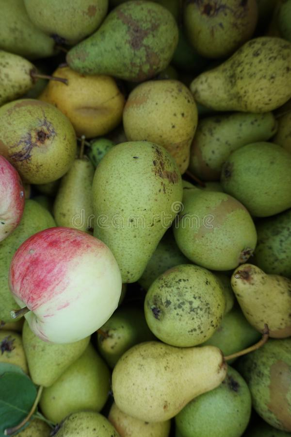 Still life of pears and apples royalty free stock photography