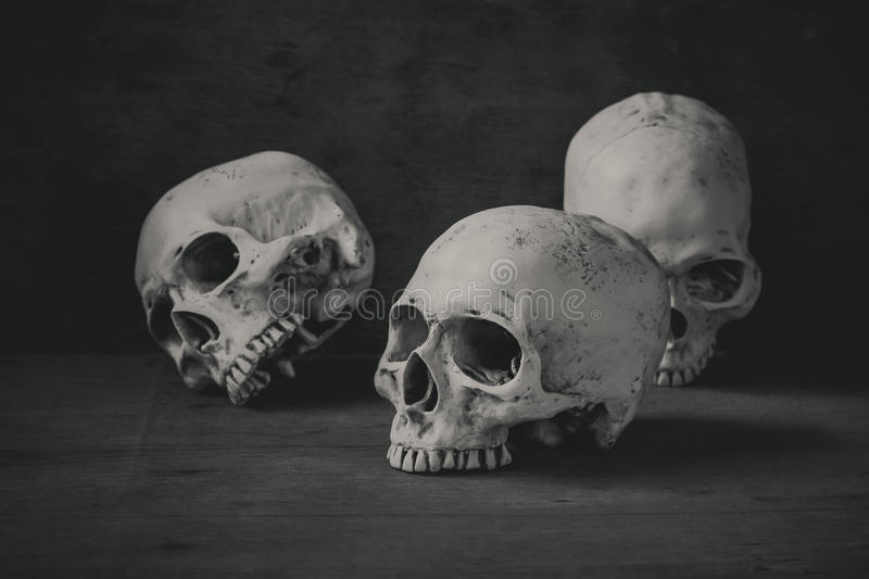 Still life photography with human skulls on wood table royalty free stock photo