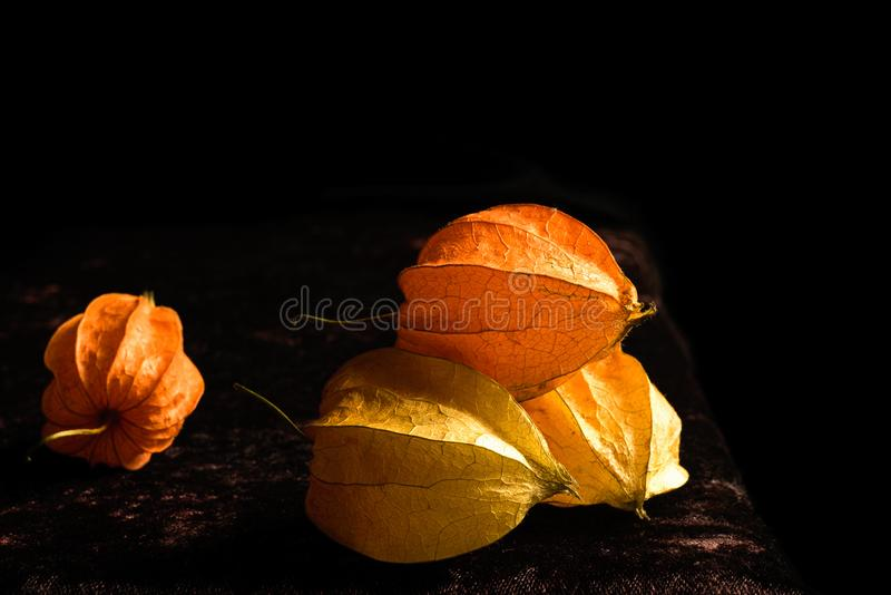 Still Life with Physalis royalty free stock photos