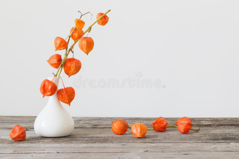 Still life with physalis stock photography