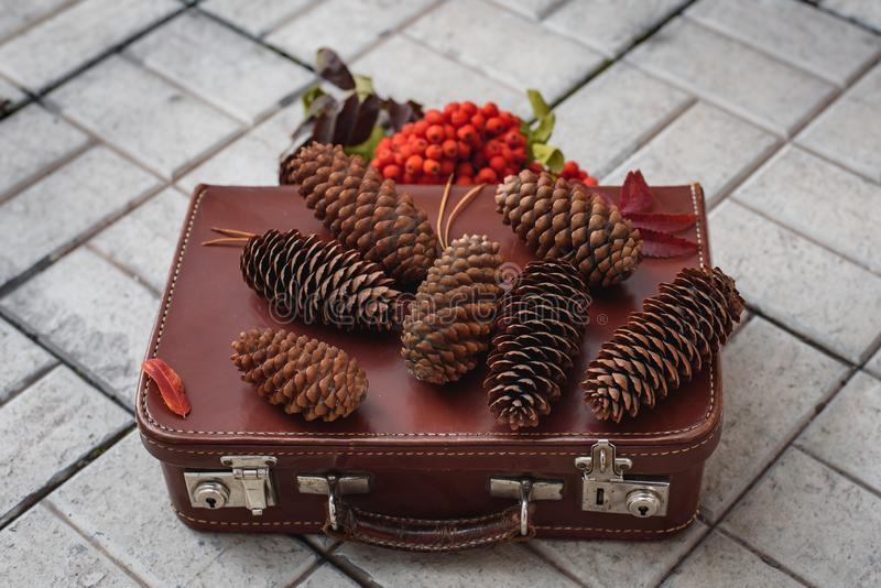 Still life of pine cones and berries of mountain ash on wooden boards, Christmas decorations. royalty free stock photo