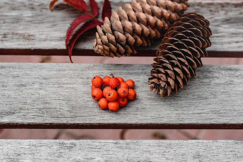 Still life of pine cones and berries of mountain ash on wooden boards, Christmas decorations. royalty free stock photography