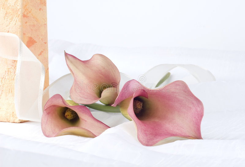 Download Still Life With Pink Flowers Stock Image - Image: 7596257