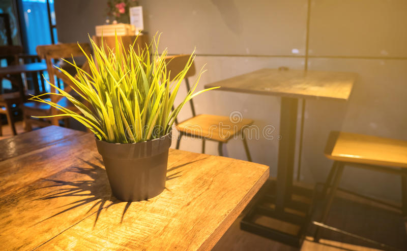 Still-life plant in low light on wood table.  stock photo