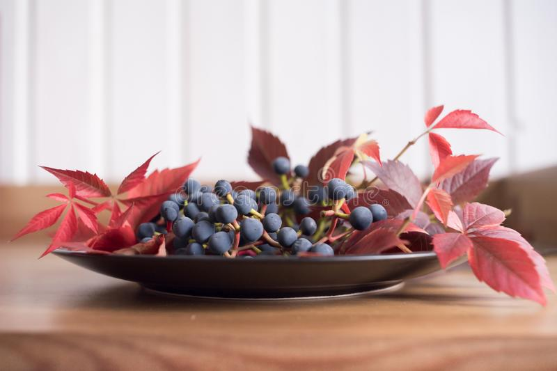 still life plate blue berries grapes indoor stock image