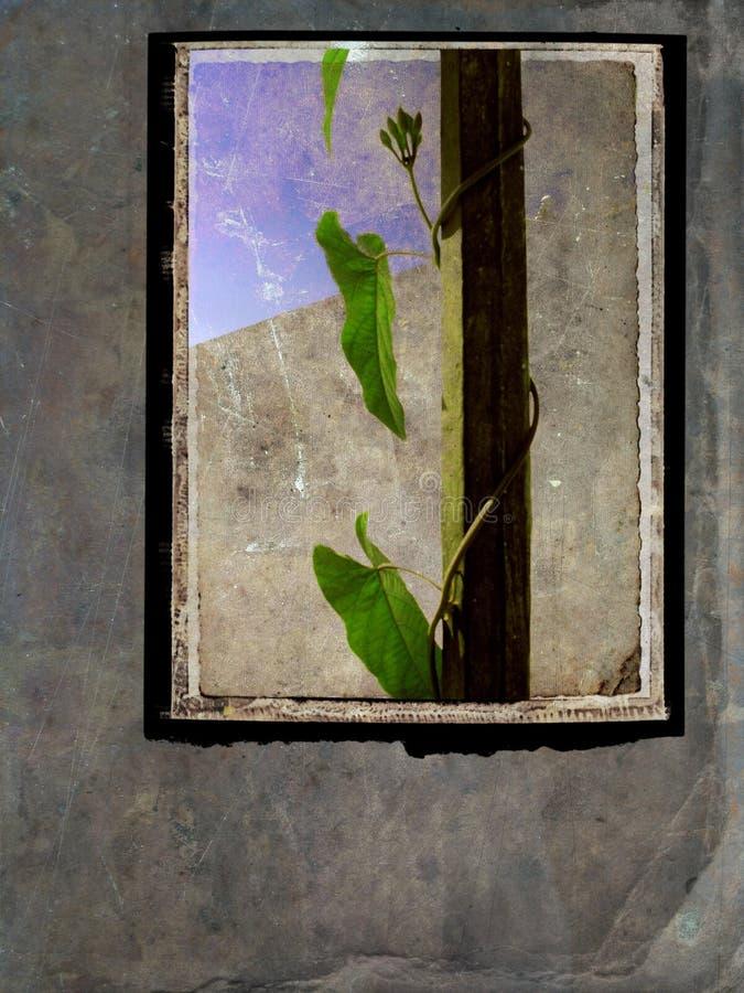 Download Still Life Postcard - Grunge Frame Stock Image - Image: 1438595