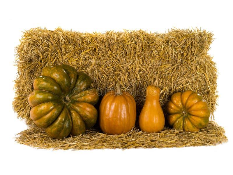 Still life pumpkin stock images