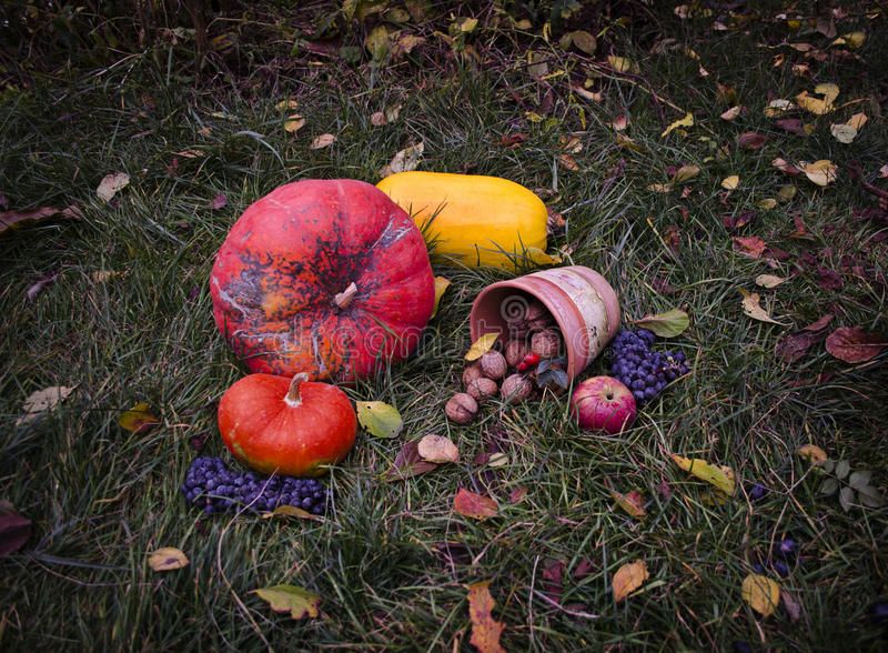 Still life with pumpkins Autumn harvest Halloween on tha grass, falling leaves, walnuts, wild rose, grapes stock image