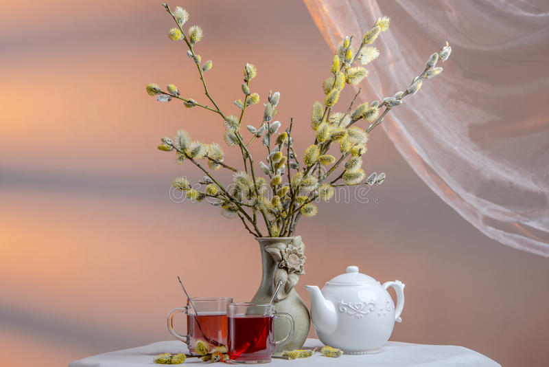 Still life with willow, two glass cups of tea and porcelain kettle. Vase with blooming furry willow branches, two glass cups of red color hibiscus tea and white royalty free stock image