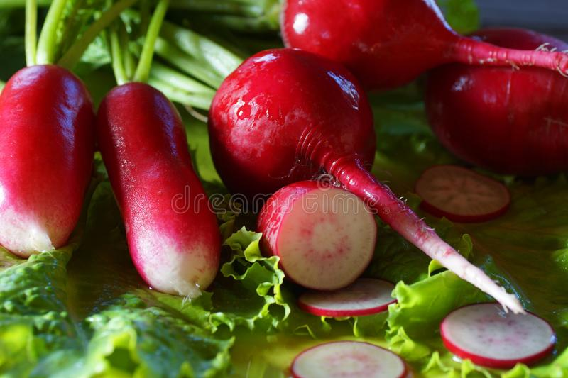 Still-life with radish and salad close-up. stock photo
