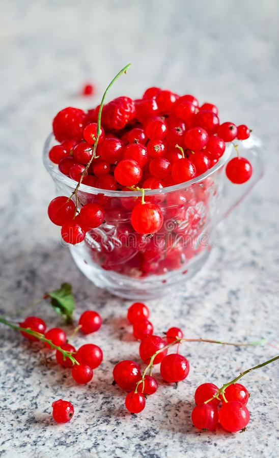 Still life red currant berries in glass mug on marble table. Still life red currant berries in glass mug on marble table background. Selective focus. Copy space stock photography