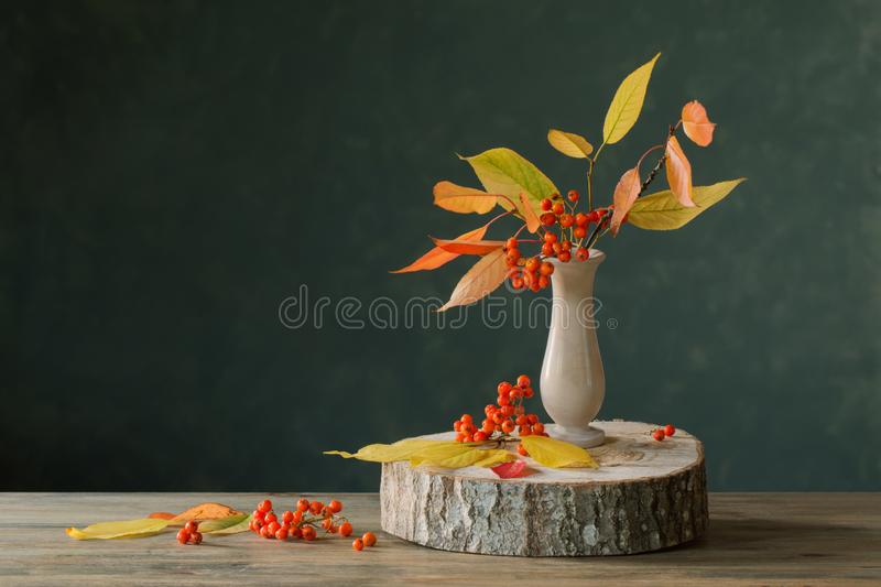Still life with rowan berries on  dark background stock photo