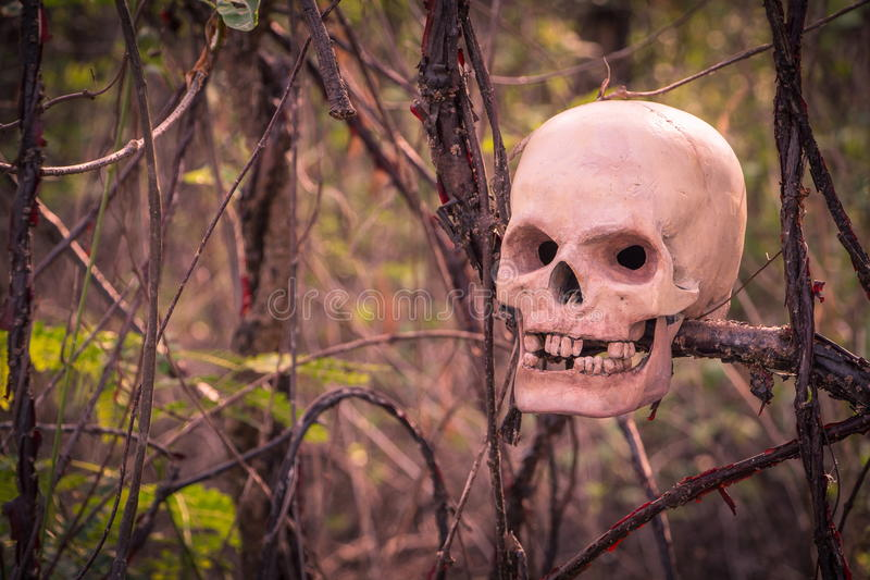 Still life with skull human in overgrown tree. stock images