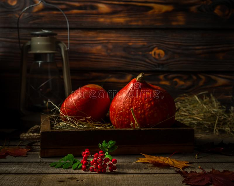 Still life with small autumn pumpkins, old lantern, and branch of rowan berries on wooden rustic background royalty free stock images