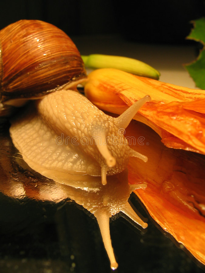 Download Still-life with a snail stock image. Image of postcard - 158097