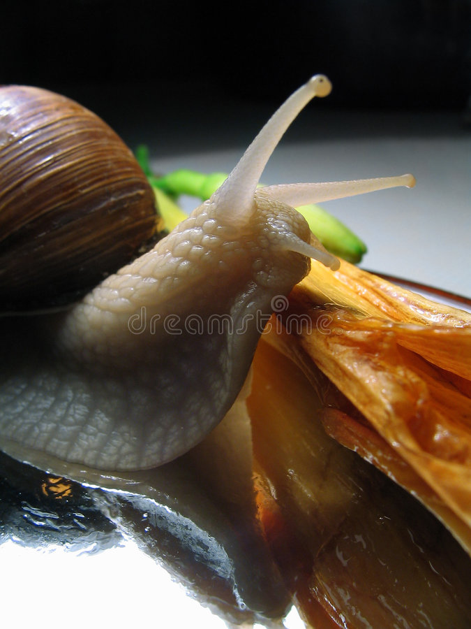 Still-life with a snail royalty free stock photos