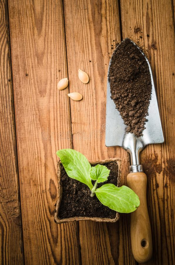 Still-life with sprouts and the garden tool royalty free stock images