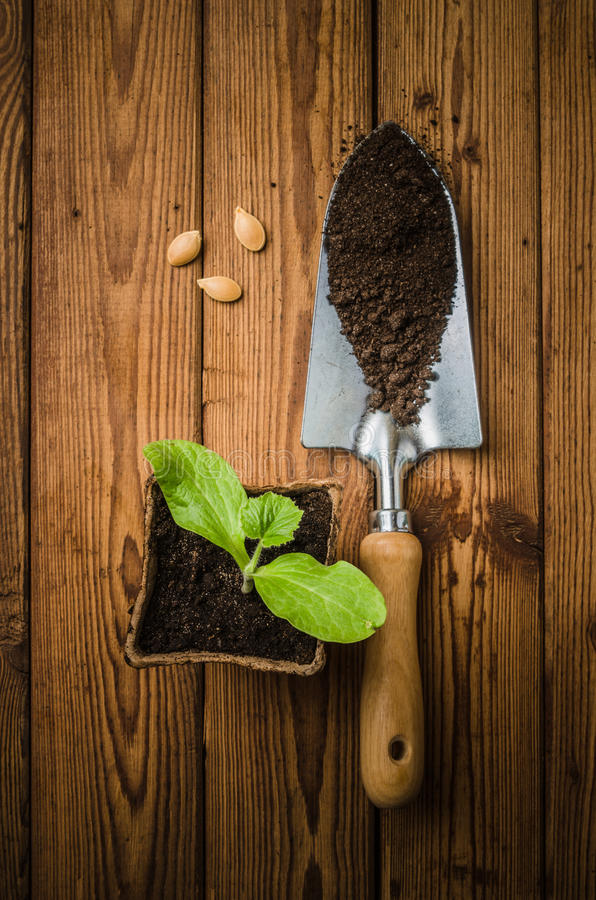 Still-life with sprouts and the garden tool royalty free stock photo