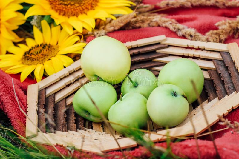 Still life sunflowers and green apples in a basket. Close-up stock photos