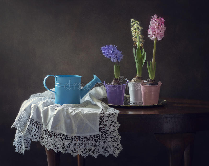 Still life three pores flowering royalty free stock photography