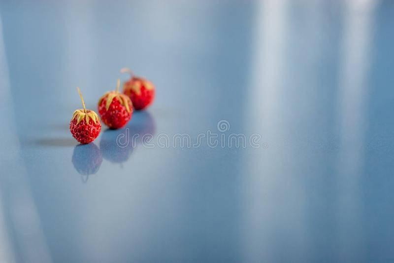 Still life of three wild strawberries on blue ceramic tiles with dust texture and reflection. Selective focus. Side view from abov royalty free stock photography