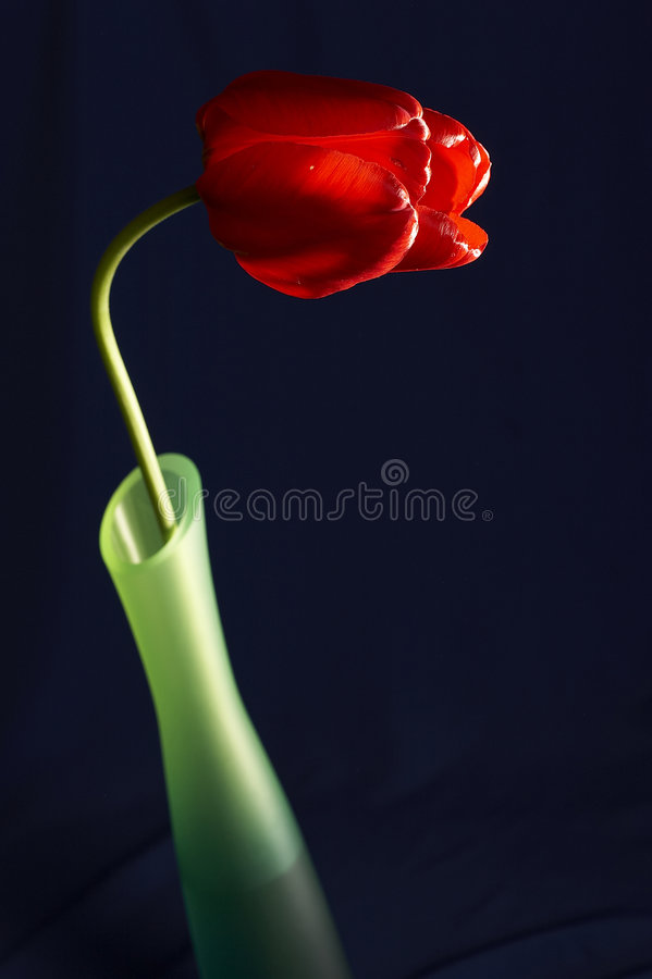 Still life with tulip in the bowl stock photography