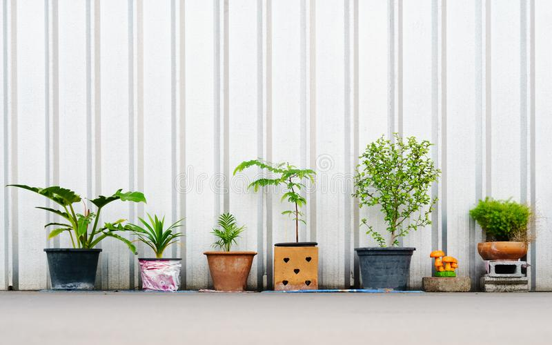 still life of various plants in the flower pots outdoors with co royalty free stock image
