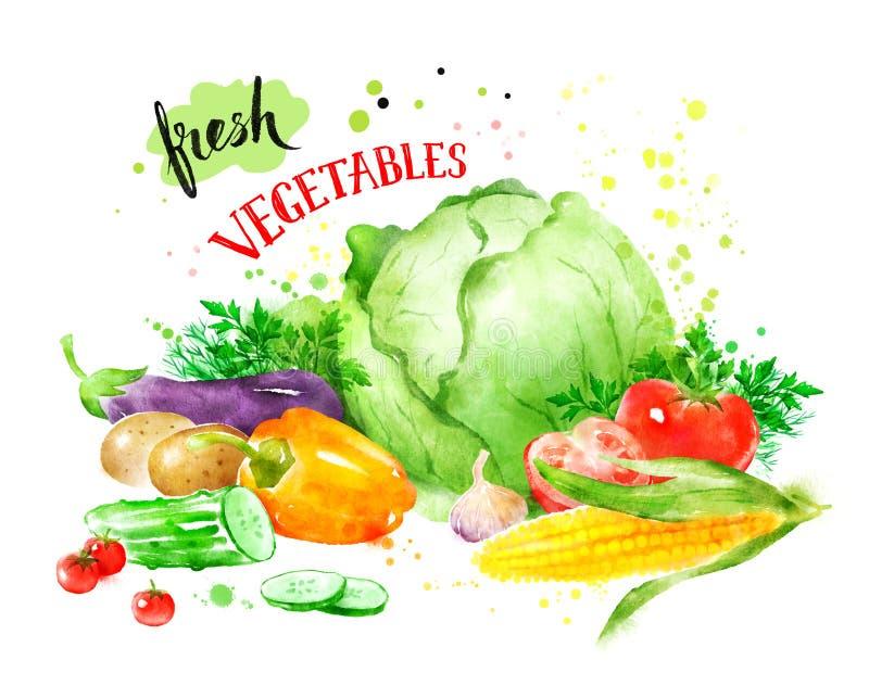 Still life with vegetables. Hand drawn watercolor illustration of still life with vegetables vector illustration