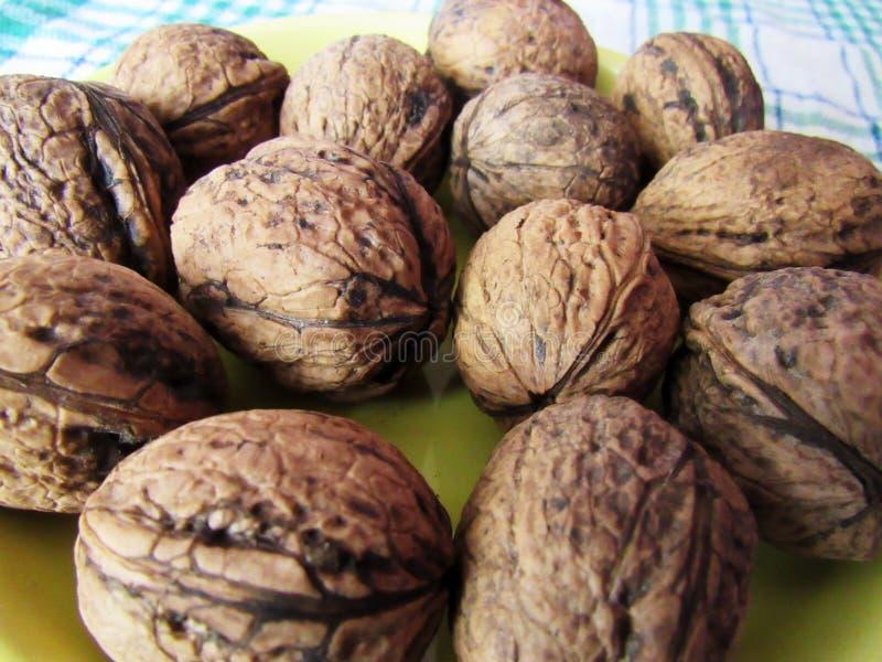 Still life walnuts stock image