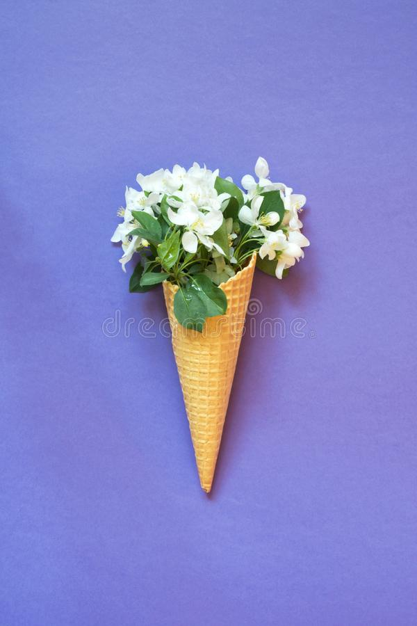 Still life of white blooming spring flower in waffle ice cream cone on violet background. Top view. stock photos