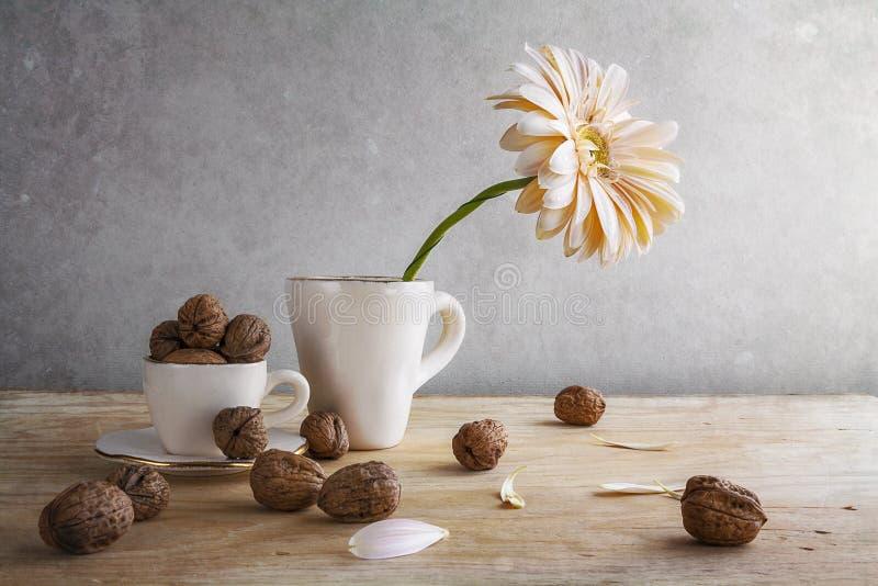 Still life white gerbera cup walnuts stock photos