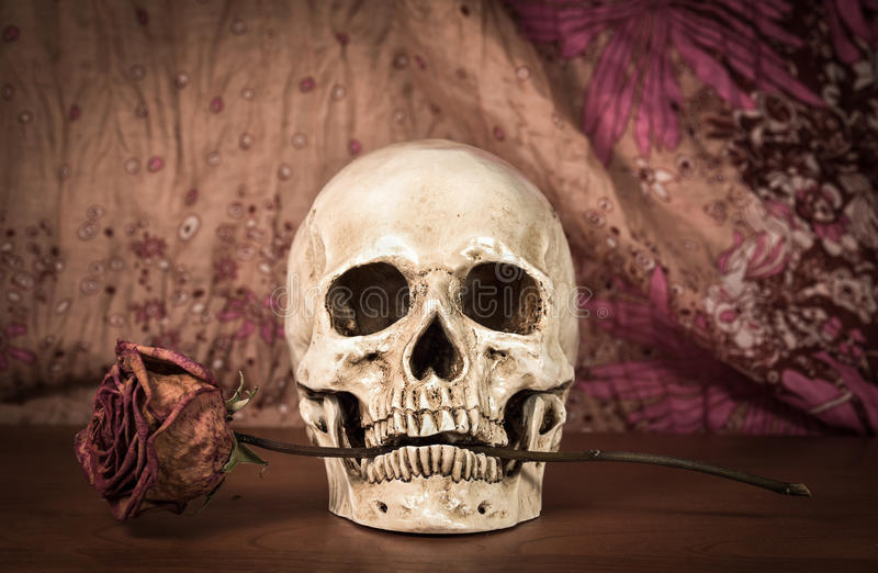 Still life white human skull with dry red rose in teeth on wooden table stock image