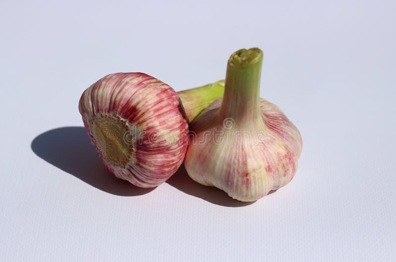 Whole garlic bulbs royalty free stock image