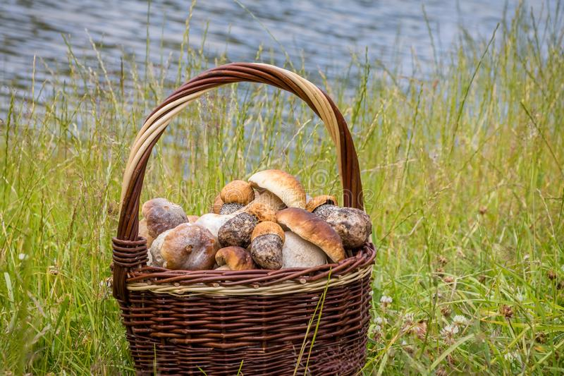 Still life with wicker basket of edible mushrooms royalty free stock photo