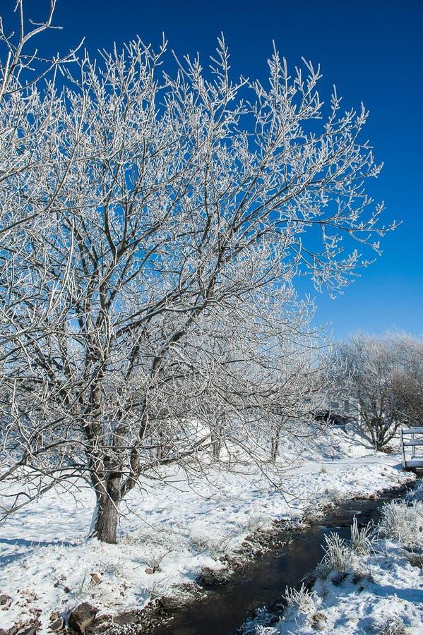 Download Still life - winter stock photo. Image of snow, still - 28851554