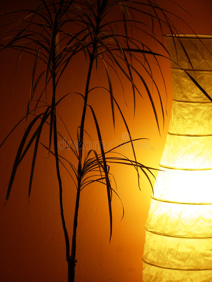 Free Still Life With Dracena Flower And Lighted Lamp Stock Photo - 11721740