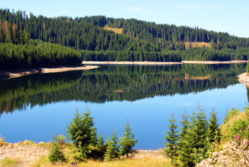Still mountain lake. Forest reflected in mountain lake stock images