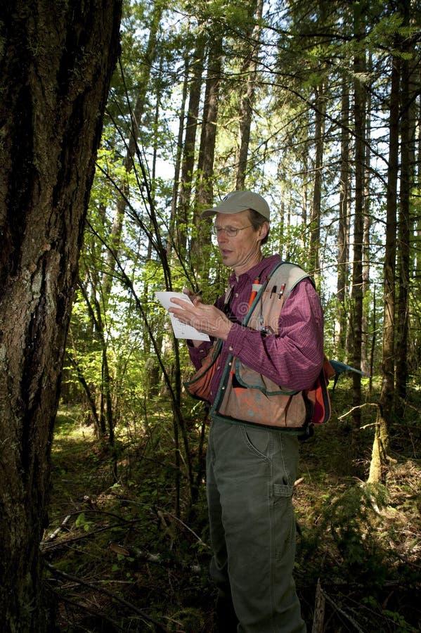 Stillahavs- skogvaktare northwest arkivfoto