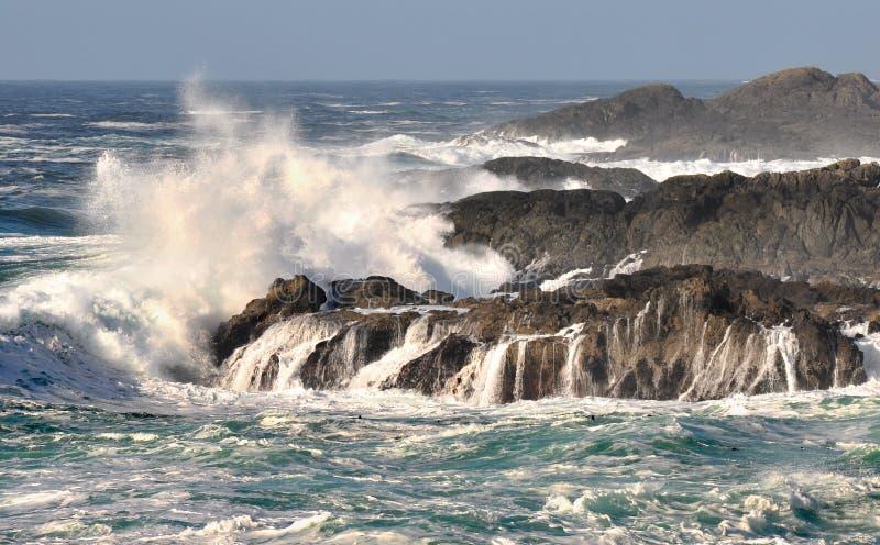 Stillahavs- waves för hav royaltyfri foto