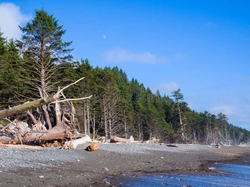 Stillahavskusten Washington State royaltyfri bild
