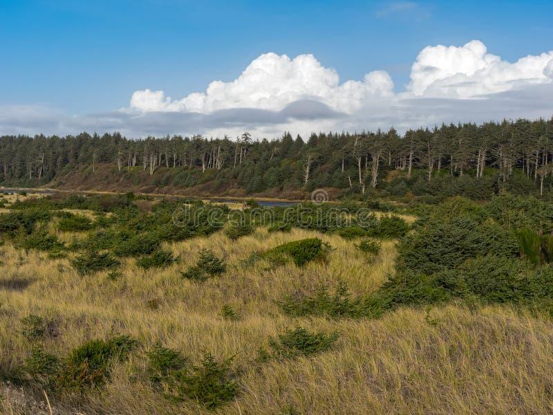 Stillahavskusten Washington State royaltyfri foto