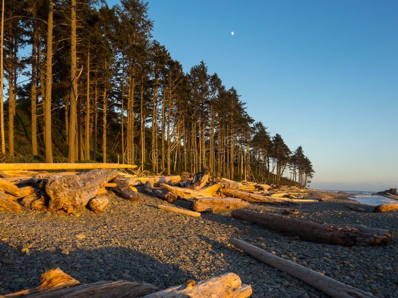 Stillahavskusten Washington State arkivbilder